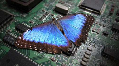 Blue Butterfly on Circuit Board